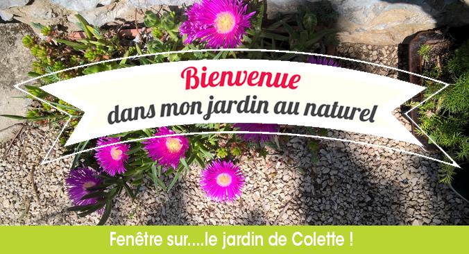 Bienvenue dans mon jardin au naturel…Chez Colette !