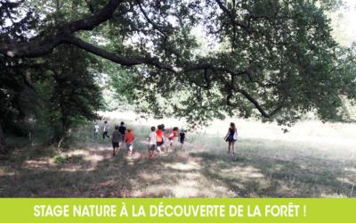Les enfants découvrent la forêt méditerranéenne !